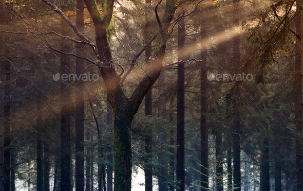 sunbeam in autumb forest - Stock Photo - Images