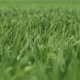 Green Grass After Rain in the Wind - VideoHive Item for Sale