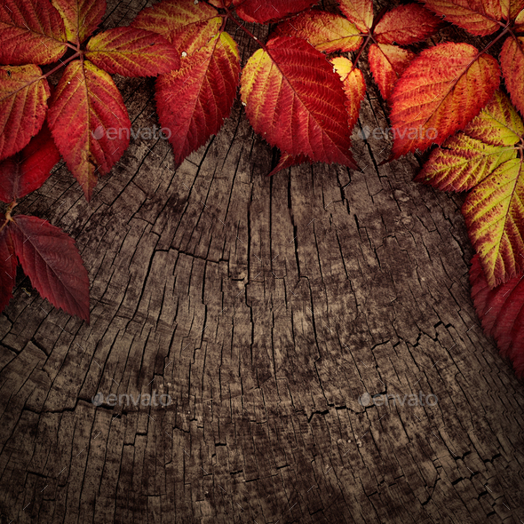Red leaves - Stock Photo - Images