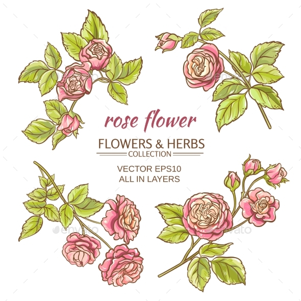 GraphicRiver Roses Vector Set 21194409