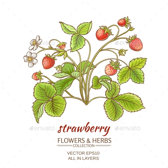 GraphicRiver Strawberry on White Background 21194413