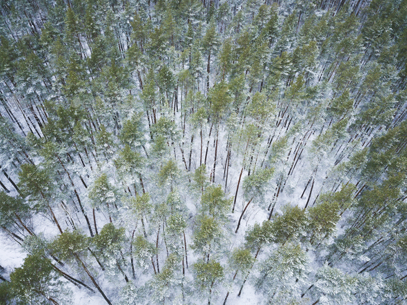 View from height to the winter forest covered with snow - Stock Photo - Images