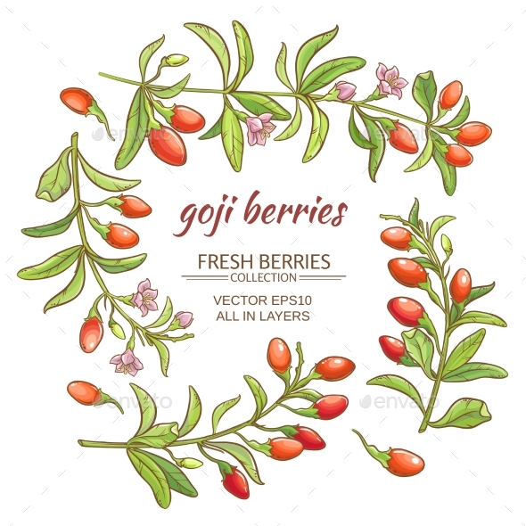 GraphicRiver Goji Berry 21194479
