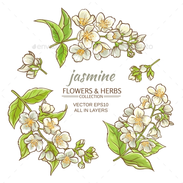 Jasmine - Flowers & Plants Nature