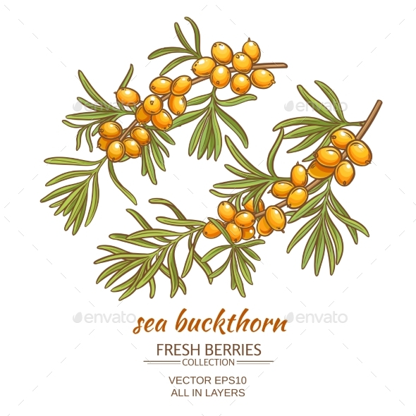 GraphicRiver Sea Buckthorn Vector Illustration 21194506