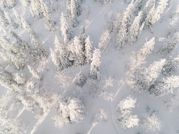 Winter forest with frosty trees, aerial view. Finland - Stock Photo - Images