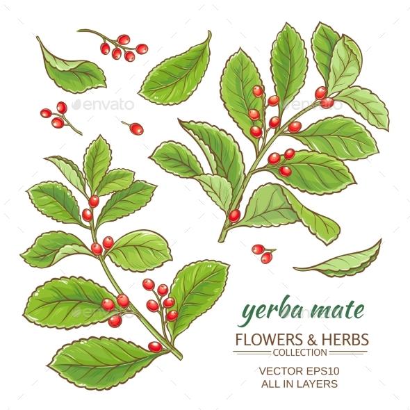 Yerba Mate Vector Set - Flowers & Plants Nature