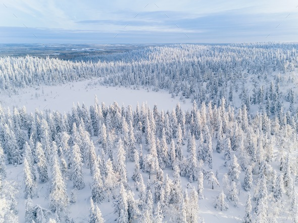 Aerial view of winter forest covered in snow  in Finland, Lapland. - Stock Photo - Images