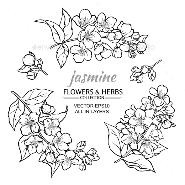 Jasmine Vector Set - Flowers & Plants Nature
