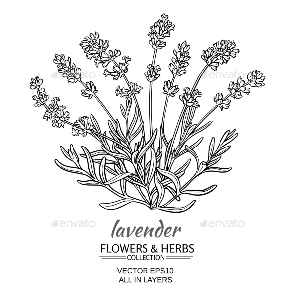 GraphicRiver Lavender Vector Illustration 21194519