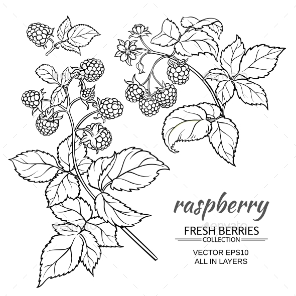 Raspberry Vector Set - Food Objects