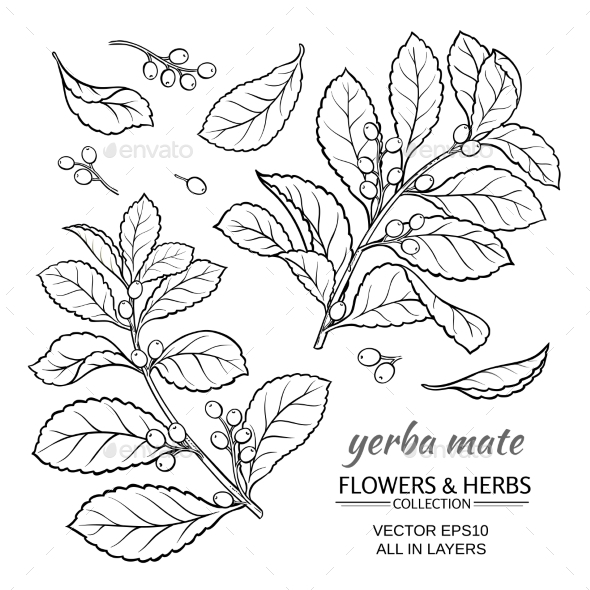 Yerba Mate Vector Set - Flowers & Plants Nature