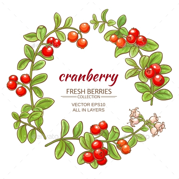GraphicRiver Cranberry Vector Set 21194567