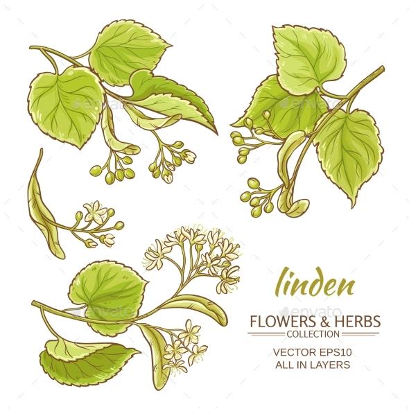Linden Vector Set - Flowers & Plants Nature