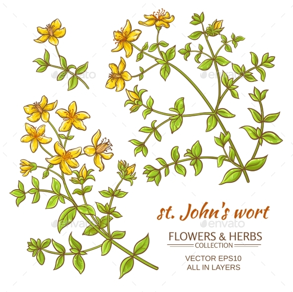 St. John's Wort Vector Set - Flowers & Plants Nature