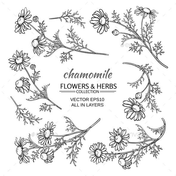 Chamomile Vector Set - Flowers & Plants Nature