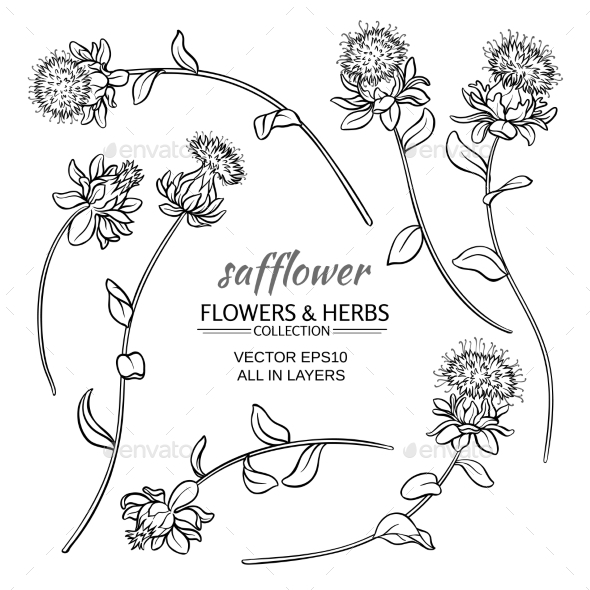 Safflower Vector Set - Flowers & Plants Nature