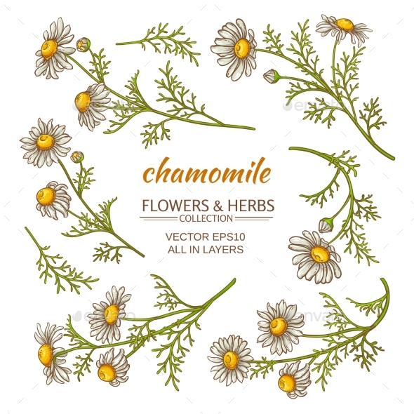 GraphicRiver Chamomile Flowers Set 21194586