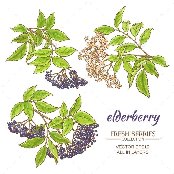 Elderberry Vector Set - Flowers & Plants Nature