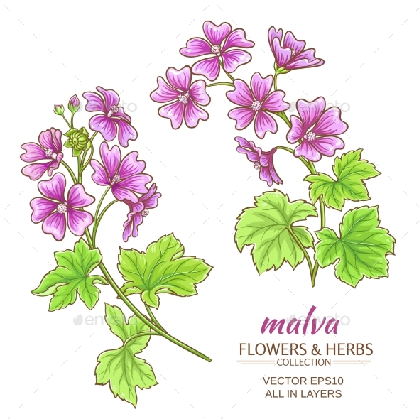 Malva Vector Set - Flowers & Plants Nature