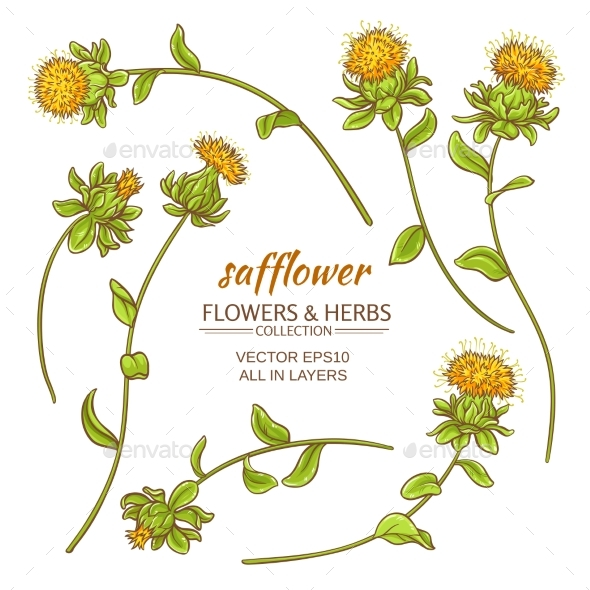 Safflower Vector Set - Health/Medicine Conceptual
