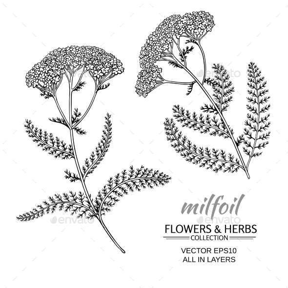 GraphicRiver Milfoil Vector Set 21194607