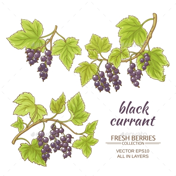 GraphicRiver Black Currant Vector Set 21194614
