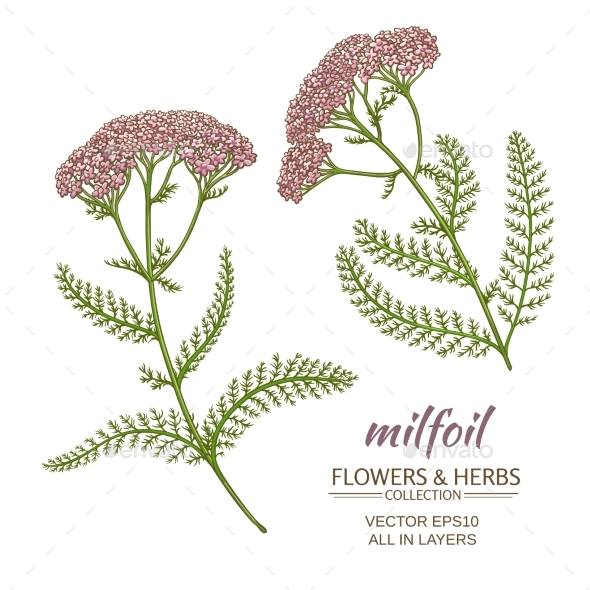 GraphicRiver Milfoil Vector Set 21194617