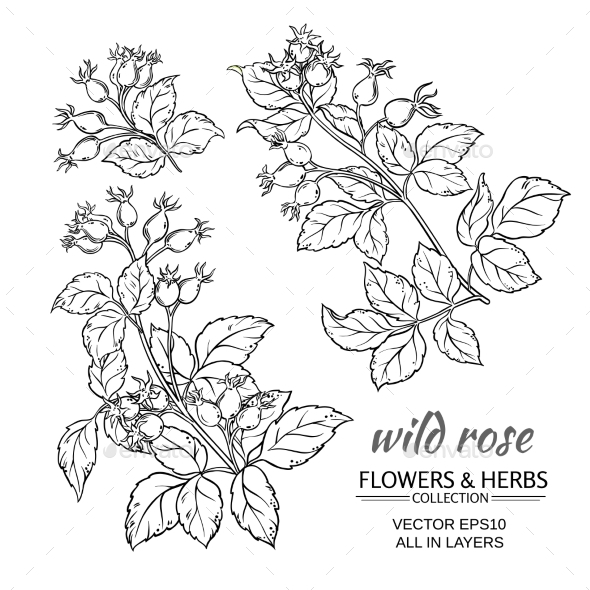 GraphicRiver Dog Rose Hips Vector Set 21194625