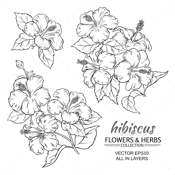 GraphicRiver Hibiscus Flowers Vector Set 21194629