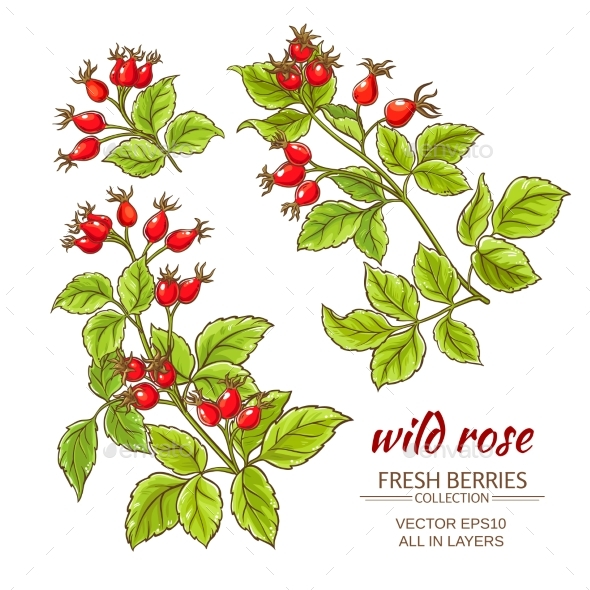GraphicRiver Dog Rose Hips Vector Set 21194643