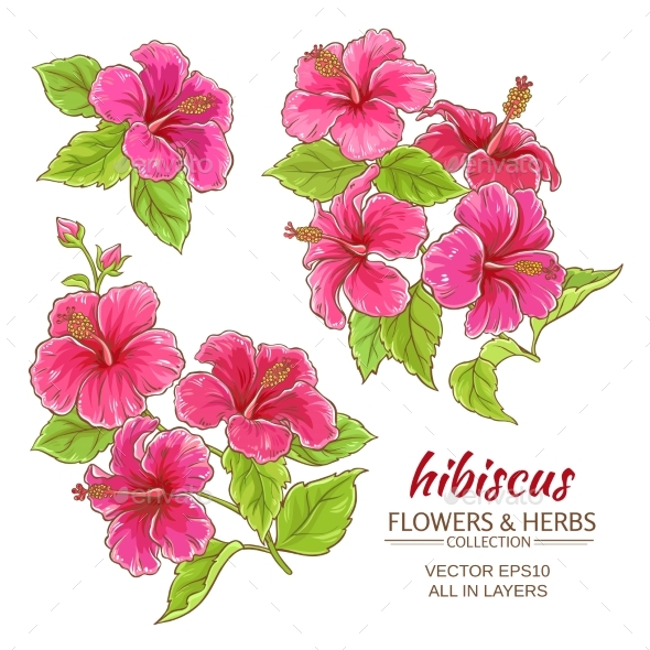 GraphicRiver Hibiscus Flowers Vector Set 21194645