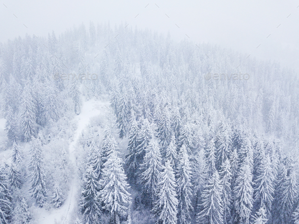 Flight over snowstorm in a snowy mountain coniferous forest, unc - Stock Photo - Images