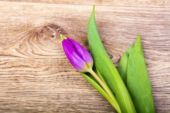 Violet tulip on a wooden table - Stock Photo - Images