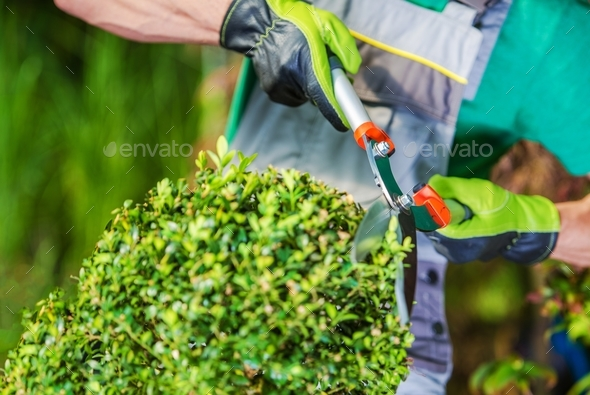 Spring Plants Trimming - Stock Photo - Images