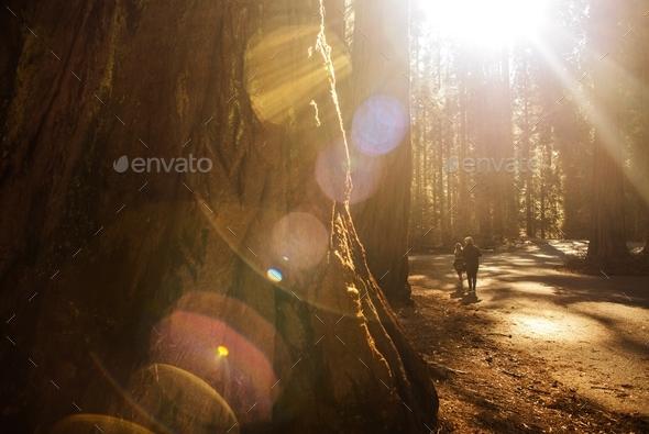 Exploring Sequoia Park - Stock Photo - Images