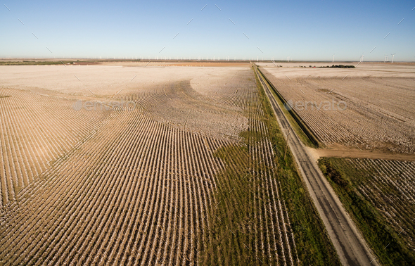 Cotton Plantation Green Energy Farm Field Wind Power Generation - Stock Photo - Images