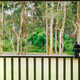 Magpie on Veranda - PhotoDune Item for Sale