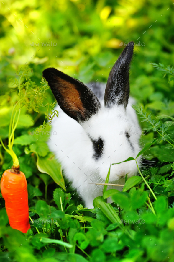 Funny baby white rabbit with a carrot in grass - Stock Photo - Images
