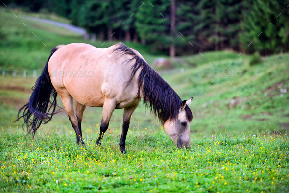 Horse on the meadow in the mountains - Stock Photo - Images
