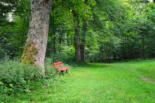 Bench in the summer park with old trees and footpath - Stock Photo - Images