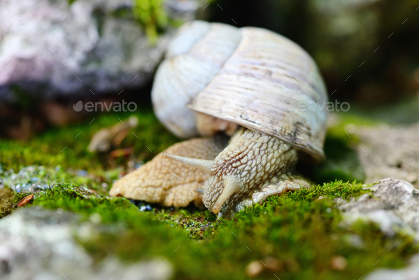 Snail crawling on the moss. Selective focus - Stock Photo - Images