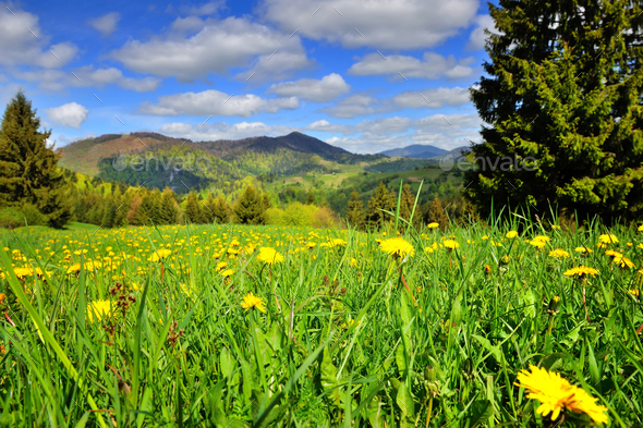 Scenic landscape with yellow dandelion flowers and mountains in - Stock Photo - Images