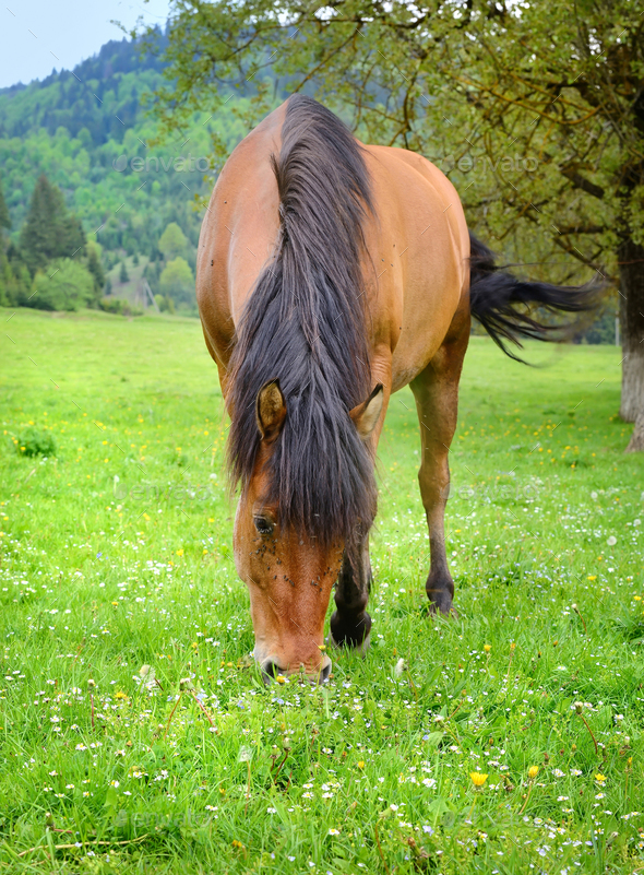 The horse is grazing on a summer green meadow - Stock Photo - Images
