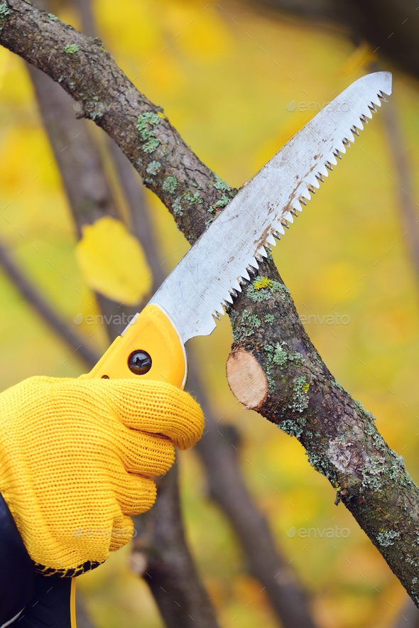Hands with gloves of gardener doing maintenance work, pruning tr - Stock Photo - Images