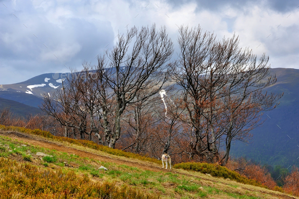 Early spring in the mountains. Early spring landscape in the Car - Stock Photo - Images