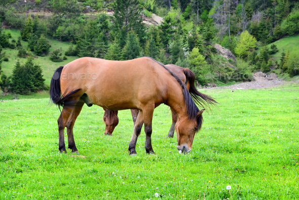 Horses is grazed on a summer green meadow - Stock Photo - Images