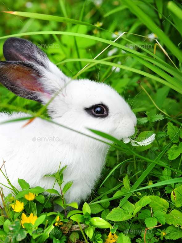 Baby white rabbit on grass - Stock Photo - Images