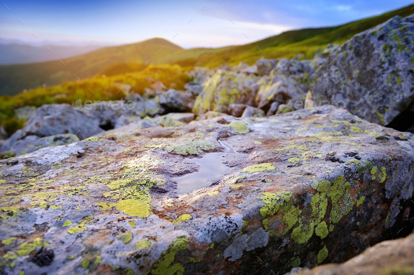 Stone with colored lichens and water in the morning rays in the - Stock Photo - Images