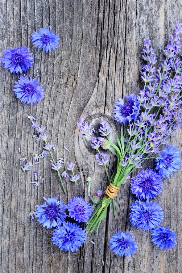 Flowers of lavender (Lavandula) and cornflower (Centaurea cyanus - Stock Photo - Images